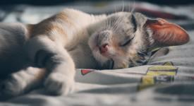 5 знака, че не спите достатъчно