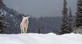 Някои от най-сполучливите филми за върколаци [част първа]