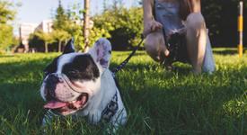 Разхождането на кучето е вид тренировка