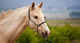 Американка научи коня си да брои до 19