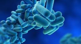 Цитоплазма бактерии