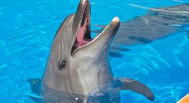 Интересни факти за делфините