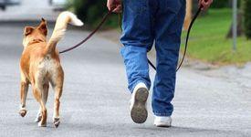 На разходка с кучето = на лов за гадже