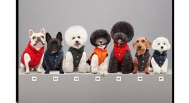 Moncler прави очарователни пухени якета за кучета