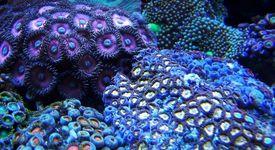 По какво си приличат морските гъби и хората?