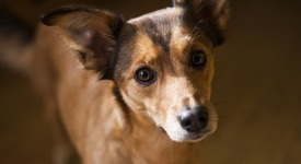 Защо кучето ти накланя глава настрани и те гледа в очите?