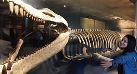 Невероятните животни, обитавали земята III част (морски чудовища)