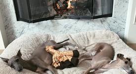 Кайли Дженър прави къщичка за кучетата си