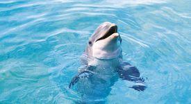 Делфините разбират какво е смъртта и тъгуват за близките си