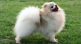 Съдът забрани на кучетата да лаят повече от 10 минути дневно