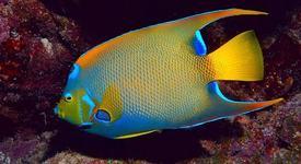Хороскоп за 2018 – Риби