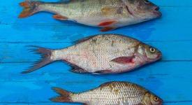 4 вида риби, които да хапвате за здраве