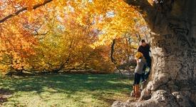 Защо есента е най-добрият сезон за любов?