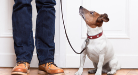 Кучетата помнят какво са направили техните стопани
