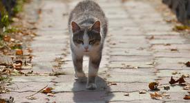 Вярна котка всеки ден носи подаръци на гроба на стопанина си