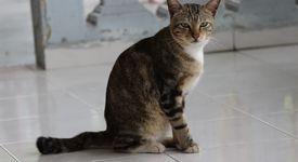 Котка спаси дете, нападнато от куче (+ видео)