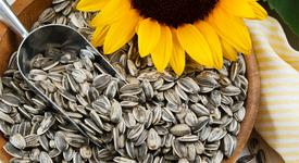 За здраве и красота: Ползите на слънчогледовите семки