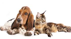 Кои са по-мързеливи - собствениците на котки или на кучета?
