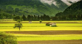 3 зодии, които предпочитат живота на село