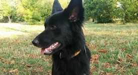 Как да изберем послушно и вярно куче