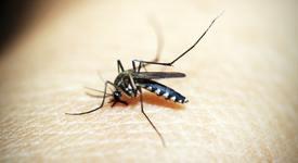 Как да се предпазите от комари през лятото?