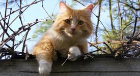 6 знака, че вашата котка ви обича