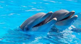 Делфините обичат да гледат ТВ