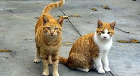 Работа-мечта: Да се грижиш за котки