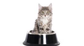 Храните и напитките, които НЕ бива да даваш на котката си