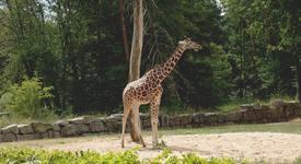 Любопитни факти за животните