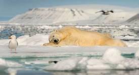 Топ 5: Ледена красота на природата