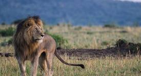 Какво е да се влюбите в Лъв