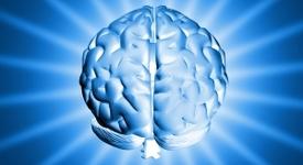 Коя половина от мозъка ви е по-силно развита според това как мислите?