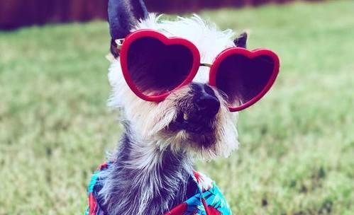Най-смешните снимки от Национален ден по обличане на любимци