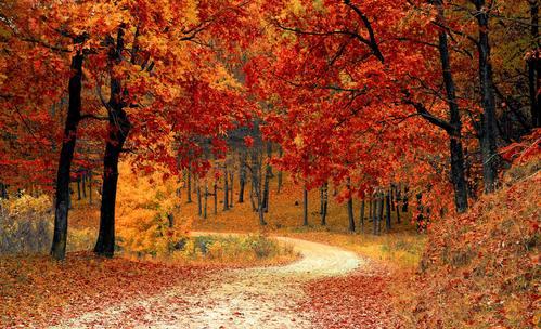 Какво да направите в началото на есента според зодията?