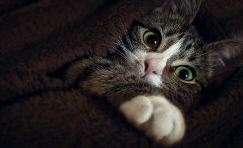 Какво иска да ви каже котката ви?