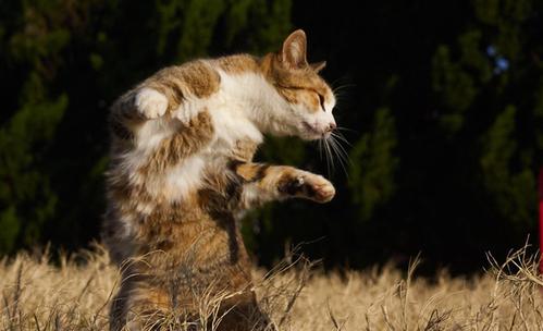 Нинджа котки или японски наемници?