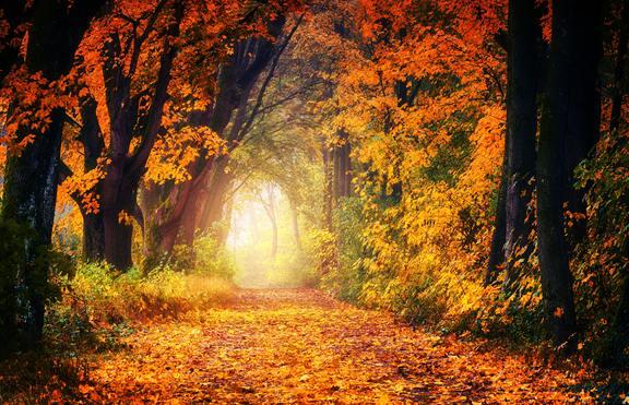 Есента ще е вълшебна за 3 зодии!