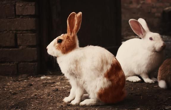 Забрана за тестване на козметика върху животни в Калифорния