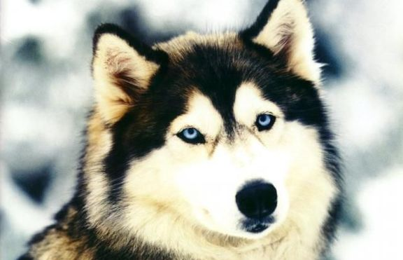 Животните във фън-шуй: Куче