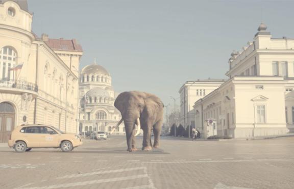 """Кристо разходи слон и тигър по жълтите павета в новото си видео """"Стъпвай смело"""""""