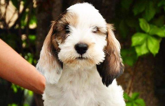 Създадоха две нови породи кучета