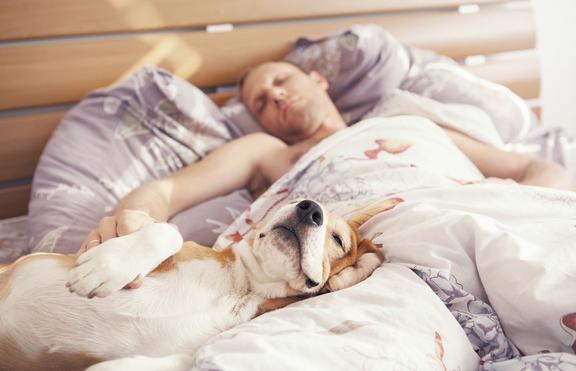 Няколко причини да НЕ спиш заедно с домашния си любимец