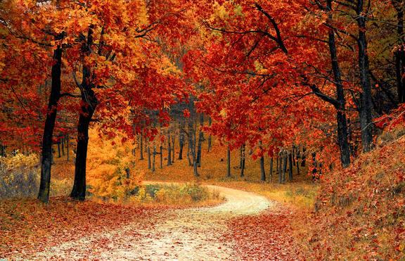 7 причини да се радвате на есента