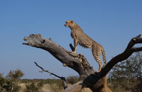 5 животни, застрашени от изчезване