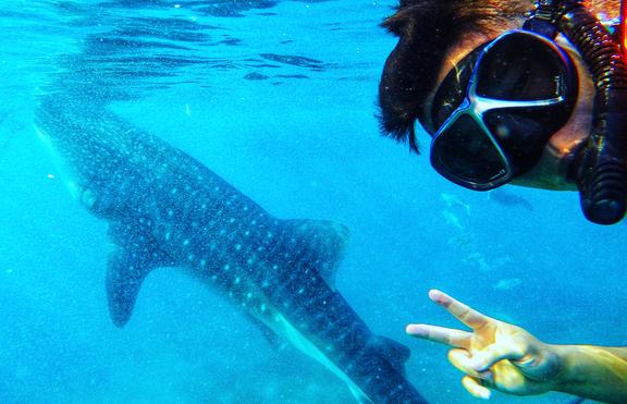 Най-девственият риф в Австралия, където може да плувате с акули