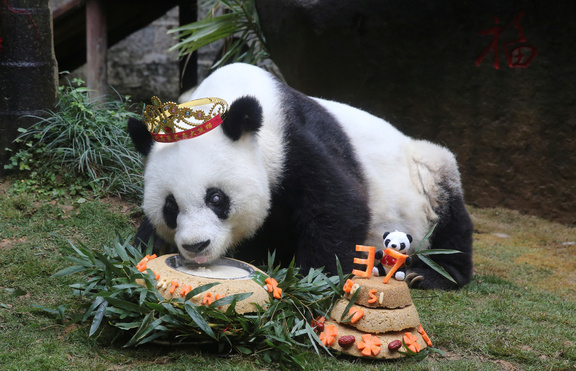Отбелязват годишнина от смъртта на най-старата панда в света