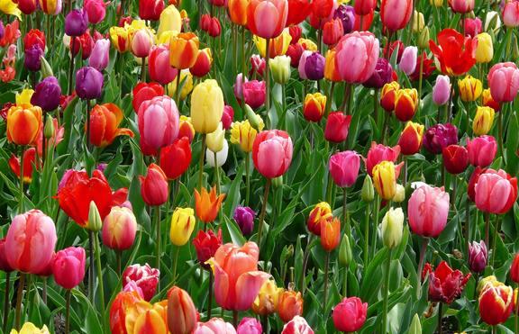 Кое е вашето цвете според зодията?