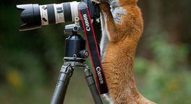 Животни в ролята на фотографи