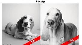 Кучешки години - снимки, които ще те разчувстват